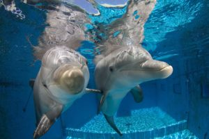 Clearwater Aquarium_Hope and Winter